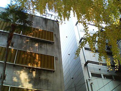 P1000255-tree.jpg