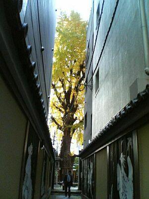 P1000260-roji.jpg