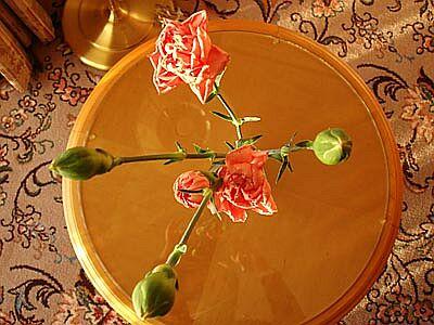 DSC01610-rose.jpg