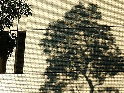 DSC02945_treeshadow.jpg