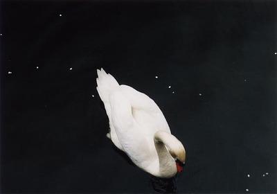 2002_04_hakuchou.jpg