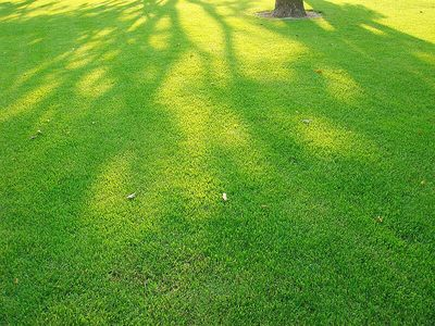 DSC06493_shadow.jpg