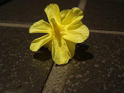 DSC06498_flower.jpg