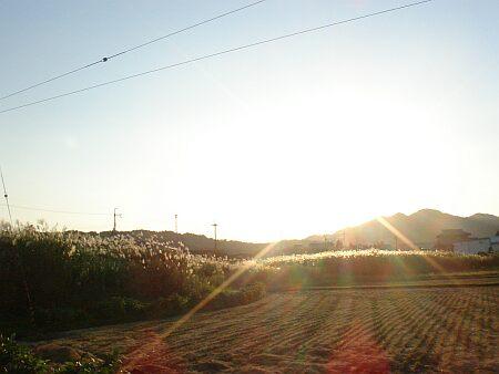 DSC08149_susuki.jpg