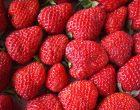 【レシピ】旬の苺を冷凍保存!超簡単に出来るめちゃウマいちごシャーベットの作り方